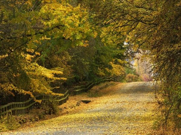 Autumn lane in Queenstown