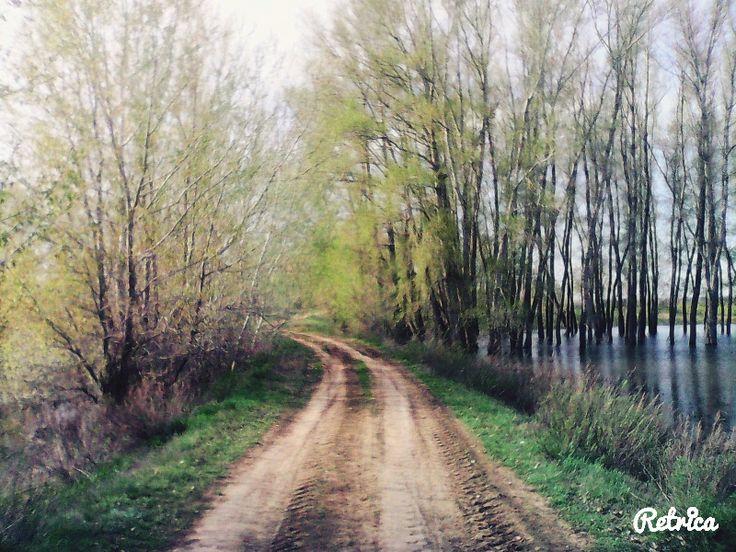 Фотография Дорога в лес участника nadja1998, одна фотография участника, Дорога в лес фото :: FotoPrizer.ru