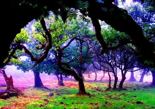 AHHHH! Thought this only existed in movies! Mystical Forest, Madeira Island, Portugal