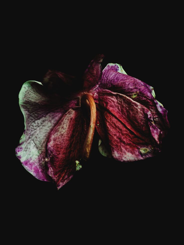 These beautiful set of photographs of decaying orchids, roses and leaves were shot by Billy Kidd, an extremely talented photographer based in New York. Usu