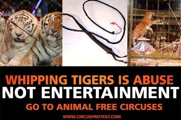 CompassionWorks Intl @CWIntl     Whipping tigers is ABUSE. #BoycottTheCircus     SIGN + RT: http://buff.ly/2iYoQln