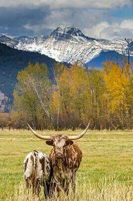 Arlee, Montana - at the western side of Montana.