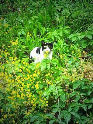 il migliore amico del mio micetto .. anche lui ama nascondersi tra le piante :)