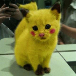 oh my goodness kitty. Pikachu + Miaouss = pi-cat-chu