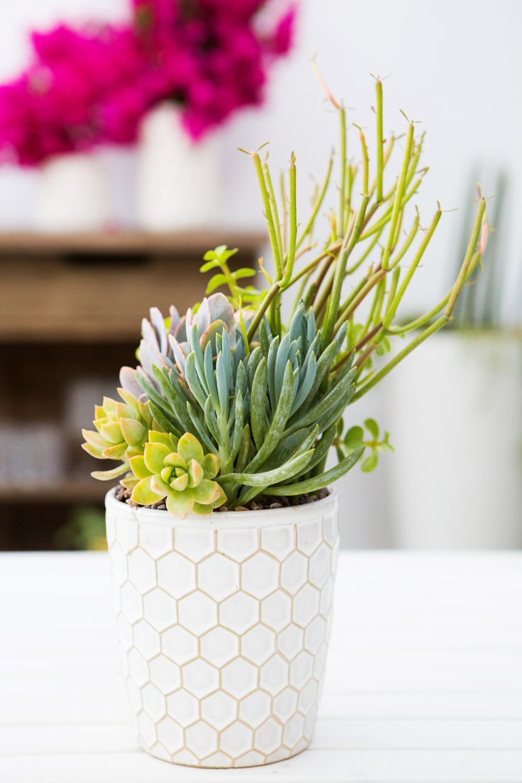 17 best images about succulent arrangements on pinterest for Garden arrangement of plants