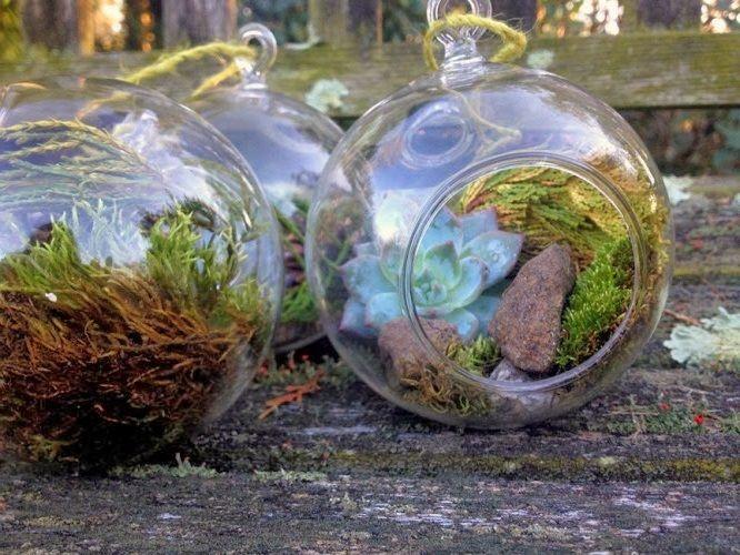 Best Bonsai Bamboo Terrarium Images On Pinterest Garden - Amazing diy non living terrarium