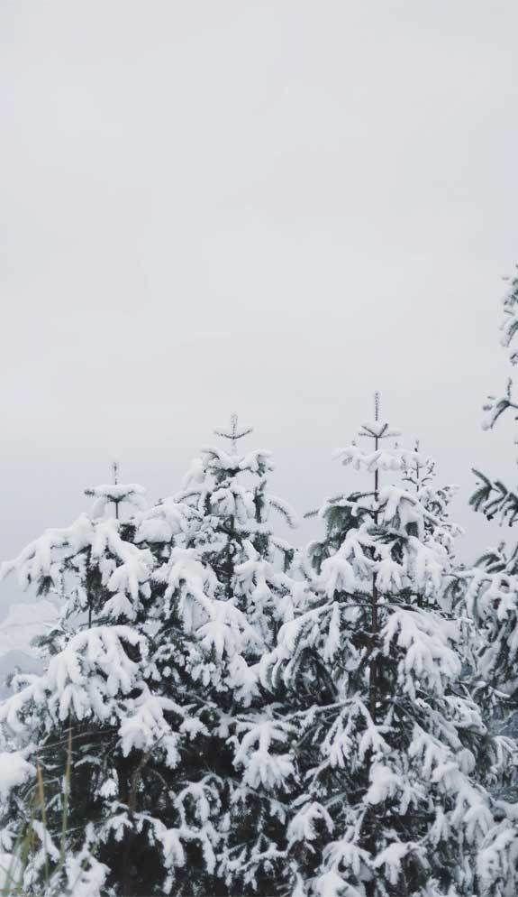 Winter Iphone Wallpaper Iphone Wallpaper Snow Wallpaper Iphone