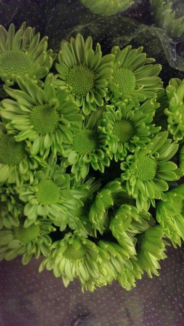 Daisy green