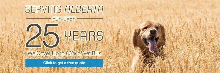 Pet Health Insurance from Petsecure