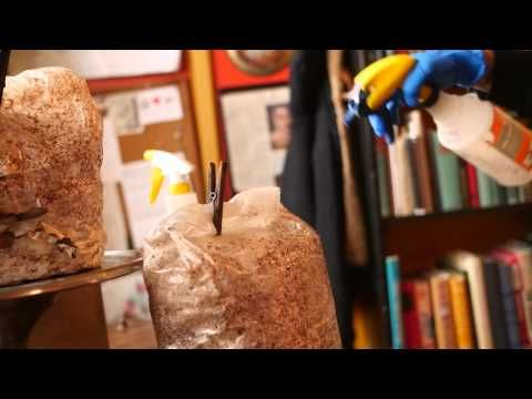 Καλλιέργεια μανιταριών pleurotus στο σπίτι