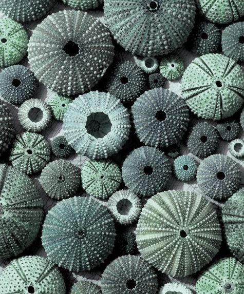 ∷ Variations on a Theme ∷ Collection of sea urchins