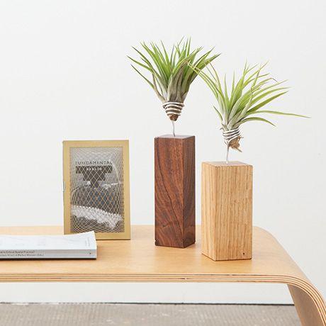 Pacaya Luftpflanze - Eiche - alt_image_three