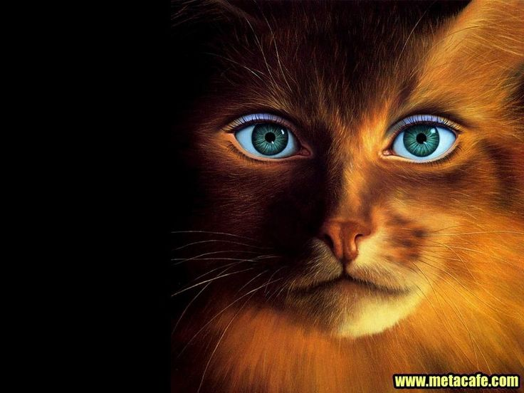 Cool Wallpapers 640x480. Eyes WallpaperFunny Cat ...