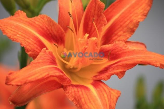 Orange flower detail