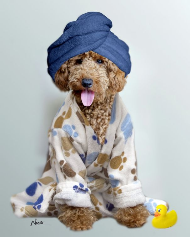 Dog Dressing Gowns - Home Decorating Ideas & Interior Design