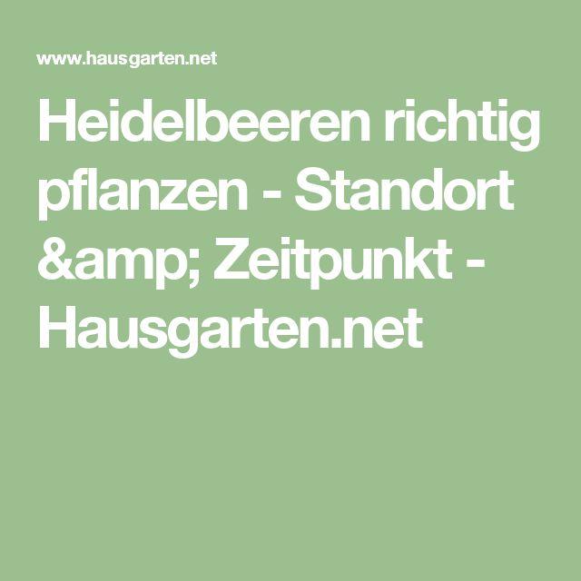 Heidelbeeren richtig pflanzen - Standort & Zeitpunkt - Hausgarten.net