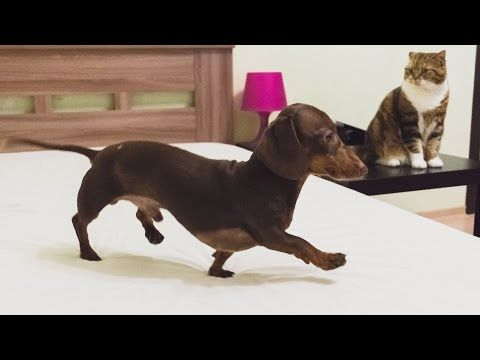 """Mr Pepper Mattress Inspector - YouTube  From your friends at phoenix dog in home dog training""""k9katelynn"""" see more about Scottsdale dog training at k9katelynn.com! Pinterest with over 18,300 followers! Google plus with over 120,000 views! You tube with over 400 videos and 50,000 views!!"""