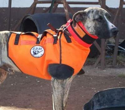 Best Cut Vest For Hog Dogs
