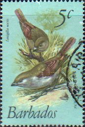 Barbados 1979 Birds Fine Used SG 624 Scott 497 Other West Indies and British Commonwealth Stamps HERE!