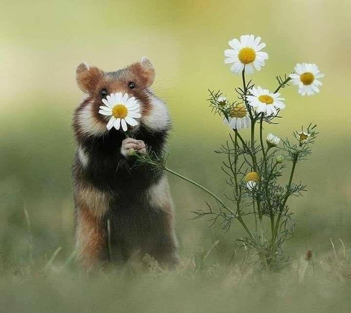 Pin Von Jennifer Lux Auf Bullet Journal Lustige Tierfotos Tier Fotos Tiere