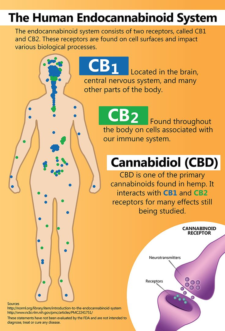 a research of the effects of marijuana on the human body View notes - summary of research findingsdocx from wrtg 300 at university of maryland - college park your topic: marijuana and the effects on the human body article #1: author(s) and title.