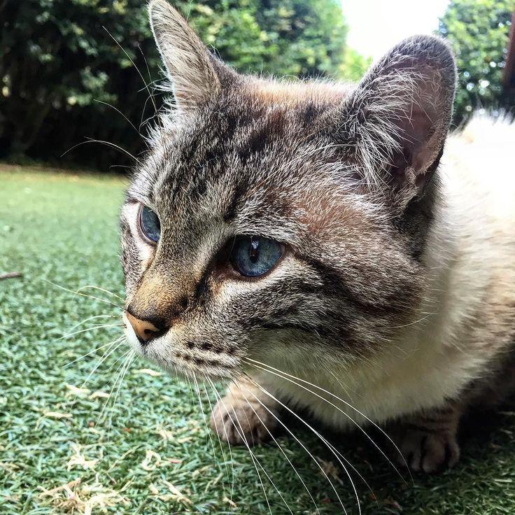 Hay algunos que siempre dan un buen primer plano. #yoda #cat #sweethome #vigo #goodnight