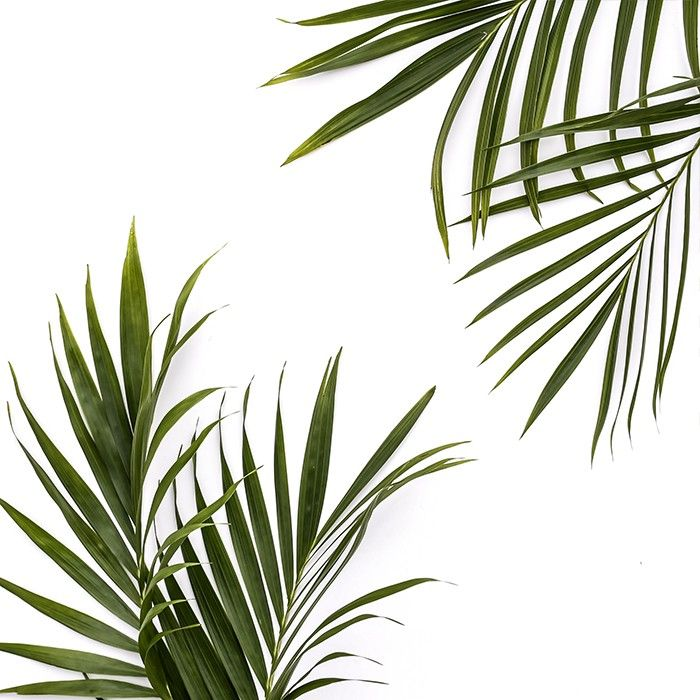 Free styled stock palm image from Shay Cochrane and the SC Stockshop. Join the newsletter to receive monthly free styled stock images. bit.ly/SCfreebies