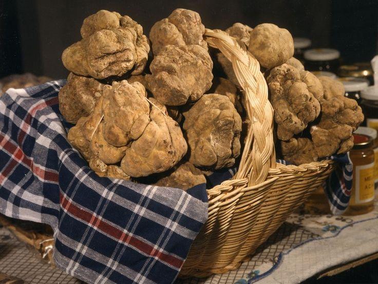 Isztriai szarvasgomba, truffles