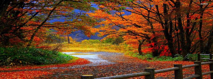 Animated Falling Leaves Wallpaper Autumn Path Facebook Covers Scenery Wallpaper Autumn