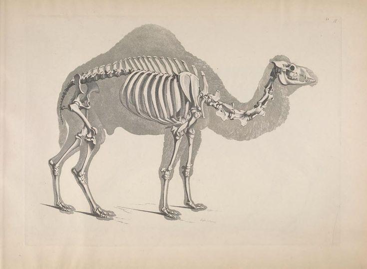 139 best Hayvan Anatomisi images on Pinterest | Tieranatomie ...