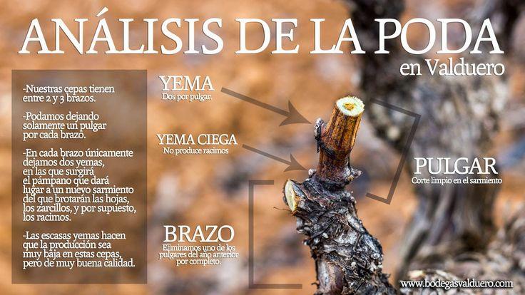 Fuentes: diariodecuyo.com.ar | pinterest.com | vinopedia.com | ediocina.com | tecnovino.com | efeverde.com | copasycorchos.com