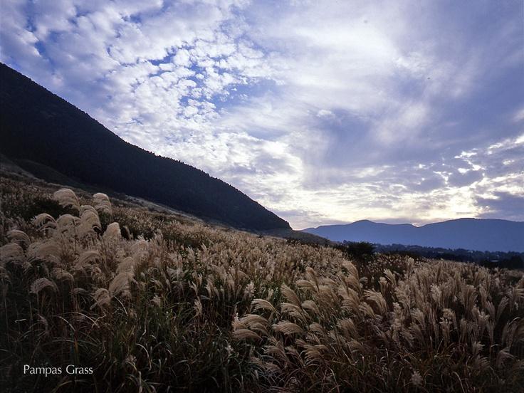 Pampas fields