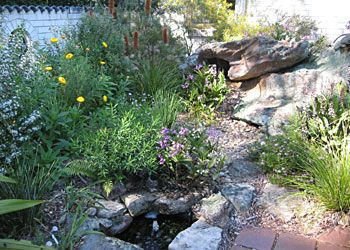 australian native garden pond