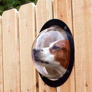 Dog Peek. So Cute!