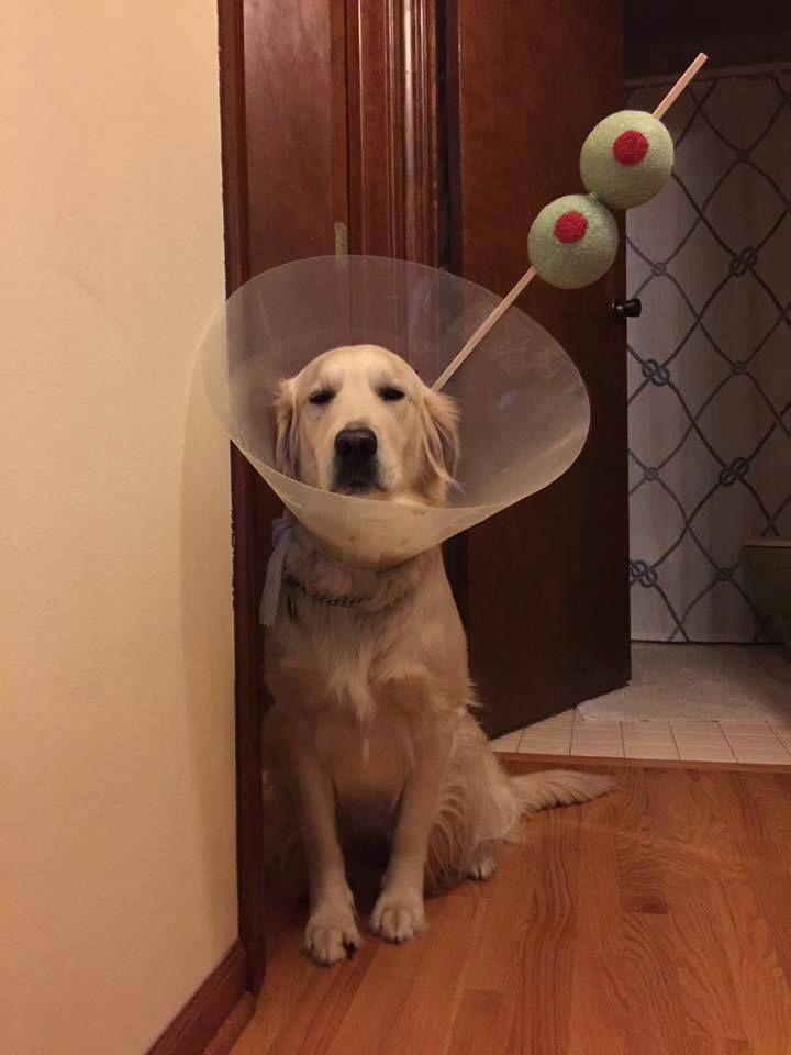 #MartiniDog #OliveDog #martini #olive #coctail #joke #dog #pet