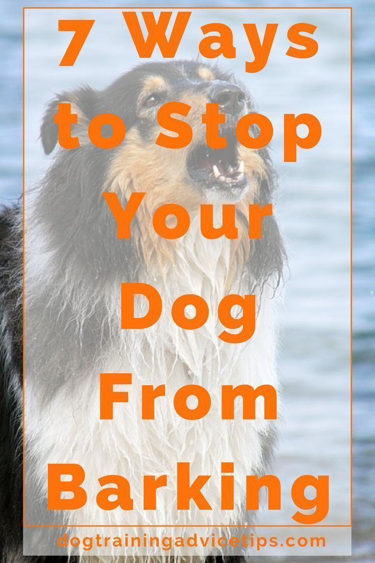 7 Ways to Stop Your Dog From Barking | Dog Training Tips | Dog Obedience Training | Dog Training Commands | http://www.dogtrainingadvicetips.com/7-ways-stop-dog-barking #DogsTraining