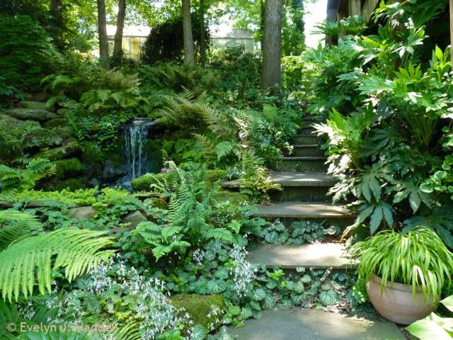 133 best landscaping ideas images on pinterest for Woodland garden designs