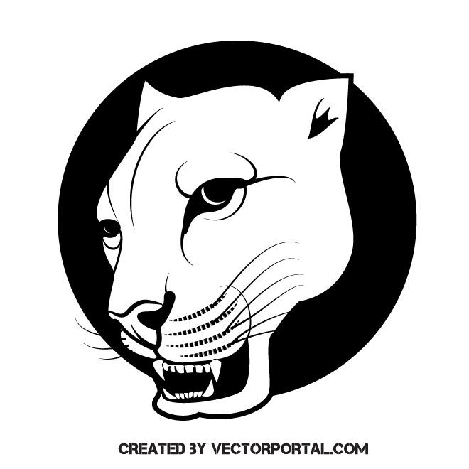 Puma Wild Cat Vector Image Cat Vector Wild Cats Vector Images