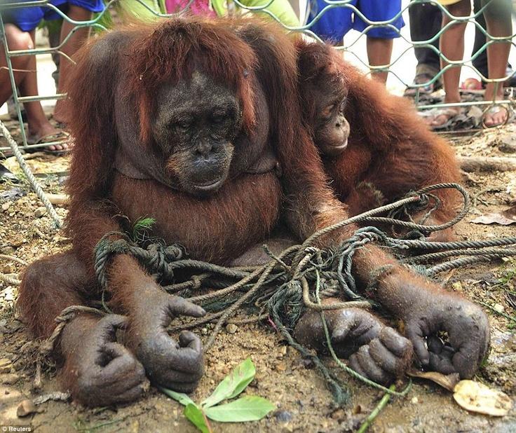 Heartbreaking - stop animal abuse