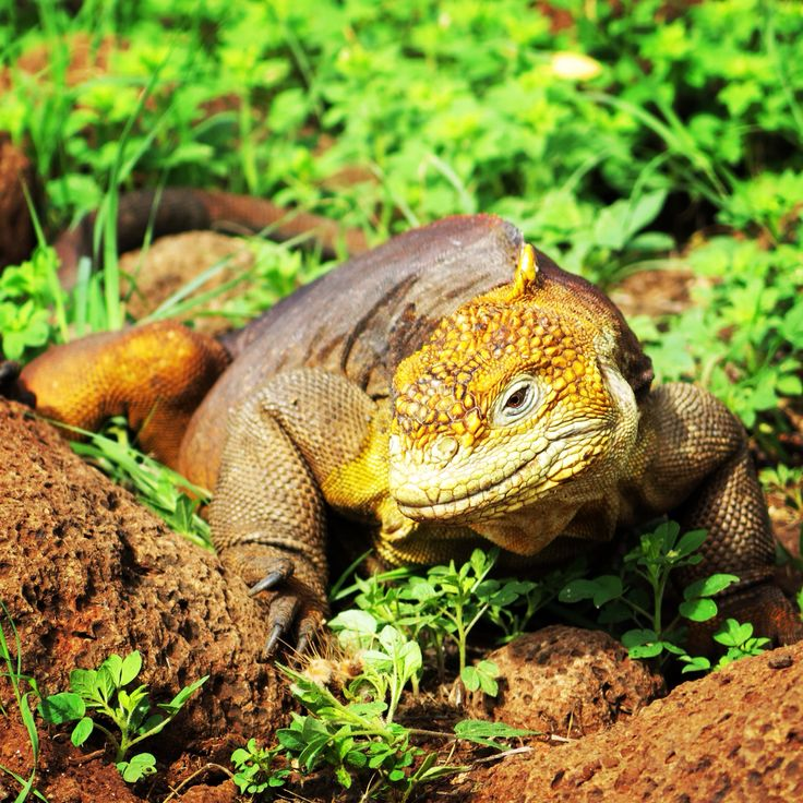 11 Best Galapagos Wildlife Images On Pinterest