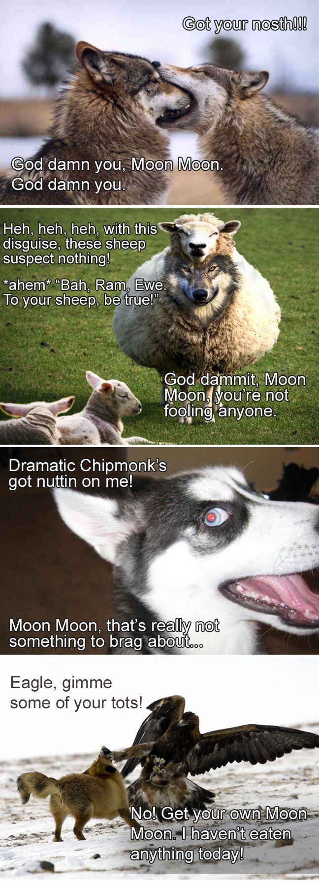 I couldn't resist making my own Moon Moon memes haha #werewolf_name @Yui Sehara @Aylee Mac