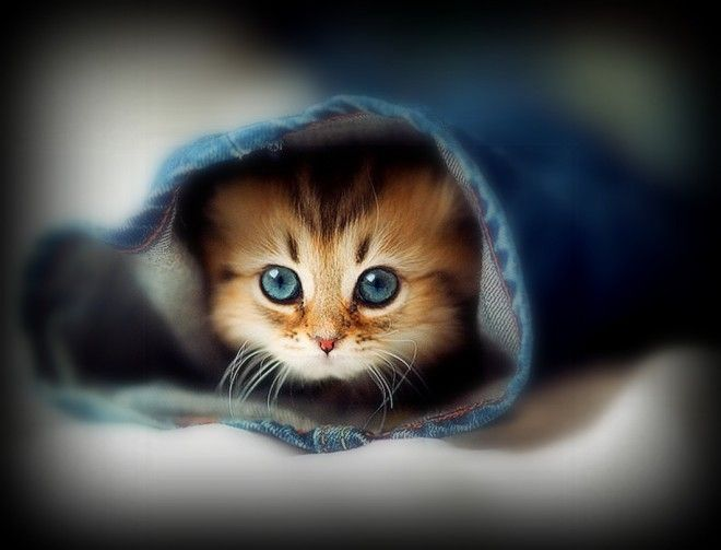 chat chaton pow wow minet mignon poilu greffier f lin adorable animal maison liti re. Black Bedroom Furniture Sets. Home Design Ideas