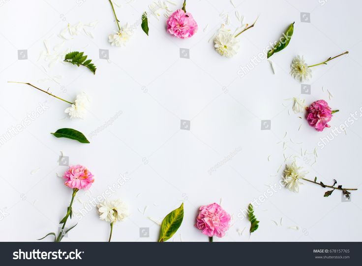 flat lay frame with flowers, branches, leaves on white background, overhead view