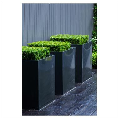 GAP Photos - Garden & Plant Picture Library - Small contemporary garden with metal square planters of Buxus sempervirens on black deck against grey painted fence - GAP Photos - Specialising in horticultural photography