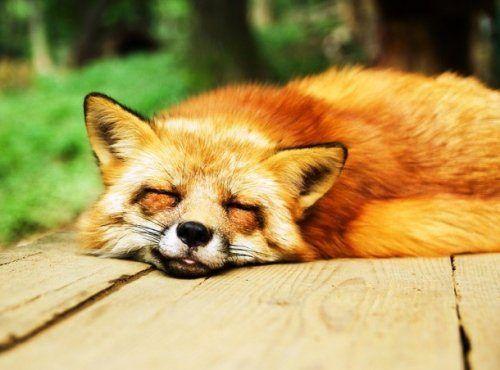 Очаровательные спящие животные