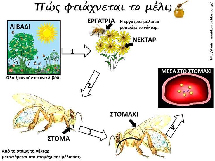 Δραστηριότητες, παιδαγωγικό και εποπτικό υλικό για το Νηπιαγωγείο: Μέλισσες στο Νηπιαγωγείο: Πώς φτιάχνουν οι μέλισσες το μέλι; Σχεδιαγραμματική απεικόνιση - Πίνακας Αναφοράς