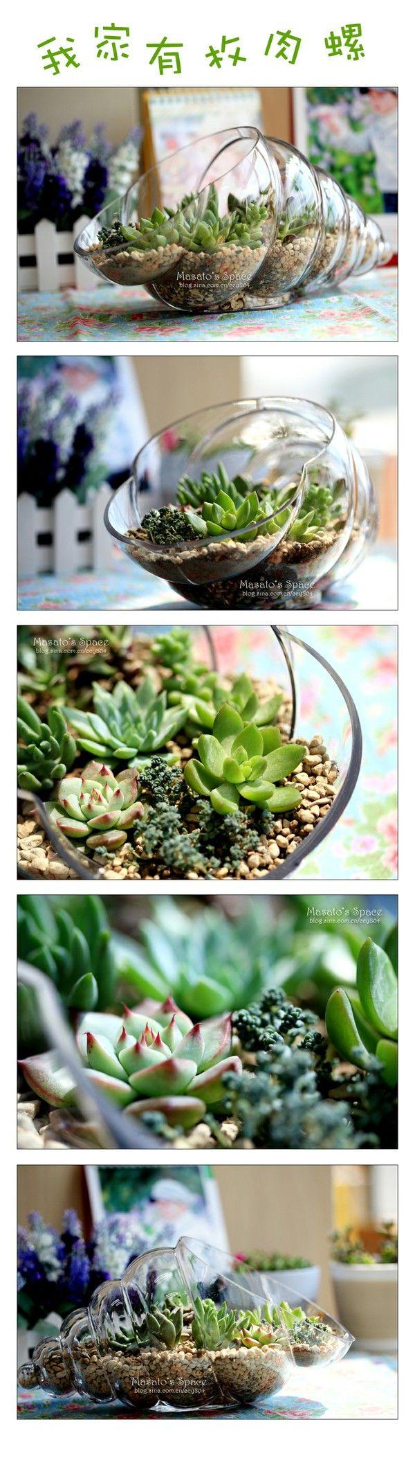 ...cactussen en vetplanten