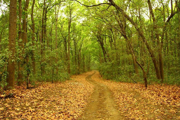 Jim Corbett National Park #IncredibleIndia