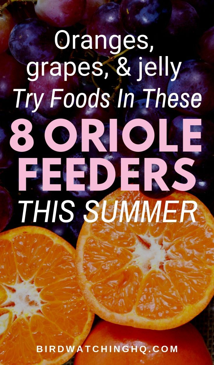Homemade Oriole Food Nectar Attracting Orioles Backyard Birds Sanctuary Nectar Recipe Eating Oranges