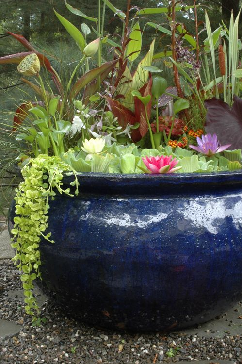 26 best water gardens images on pinterest garden ponds for Pond in a pot ideas